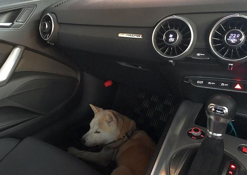 外車ならレザーシートだよね?