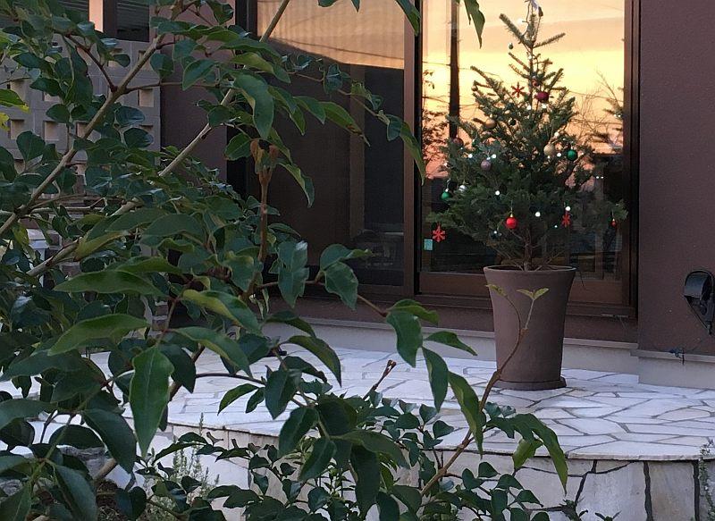 クリスマスツリーを「もみの木」から作るレシピを公開します(食えません)