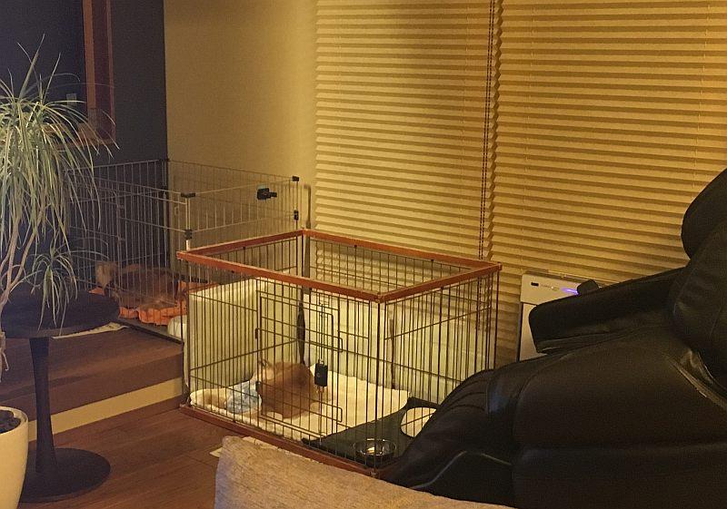 「犬と暮らす家」計画、遂に完結!? 犬に感想を聞いてみた(笑)