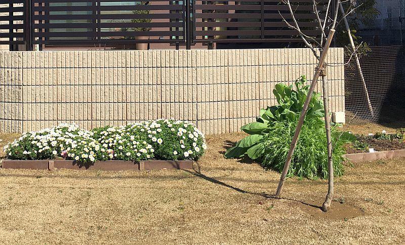 春の家庭菜園で簡単に収穫できたものと菜園のサイズ感の話