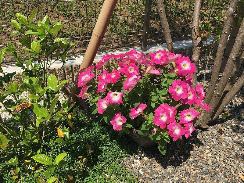 枯れそうな植物を復活させる方法 →→→ 温かく見守っとけ!笑