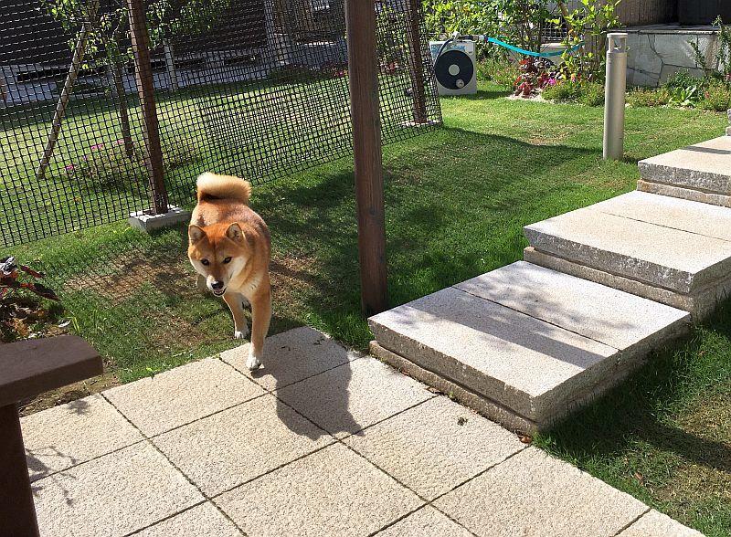 ドッグランを庭にDIYで手作りする方法