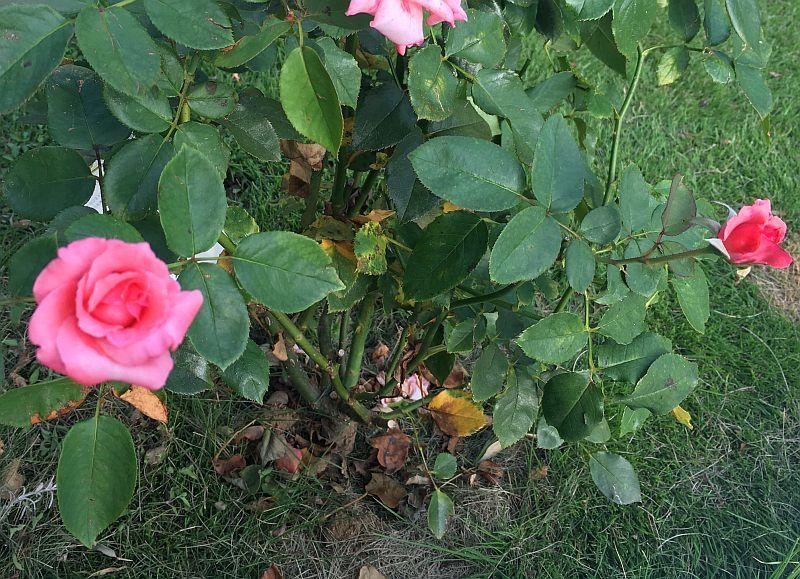 台風で折れてしまった花や苗木を復活させる方法