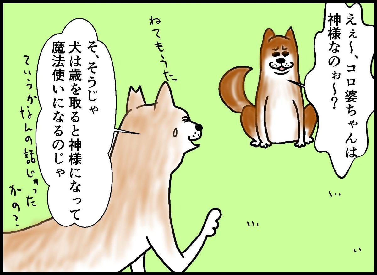 犬は歳をとると人の話を聞かない