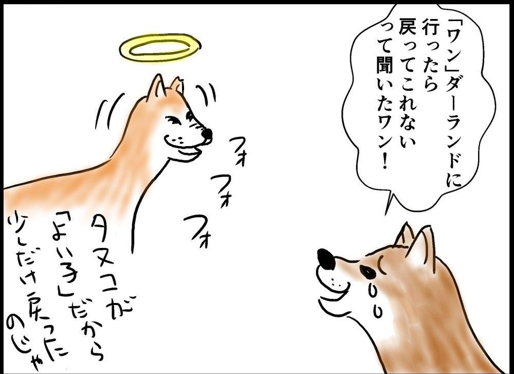 犬は霊が見えるのか
