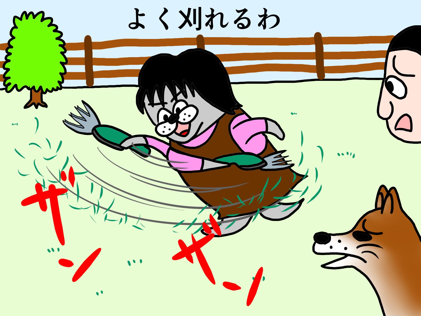 庭の目隠しにモッコウバラはオススメ